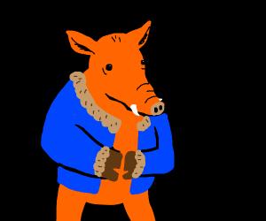 Boar wearing a Coat