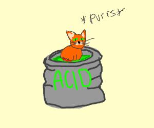 Cat enjoys melting in acid