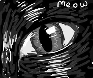 close up of a black cat's eye