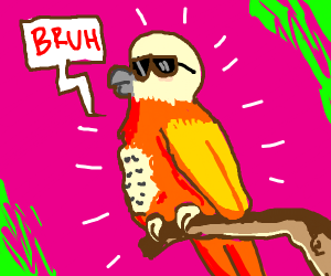 cool bird saying bruh