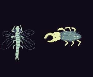 Beetle and Dragonfly
