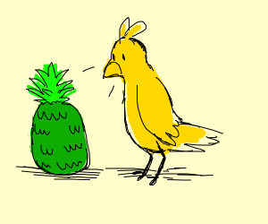 birb looks at green pineapple