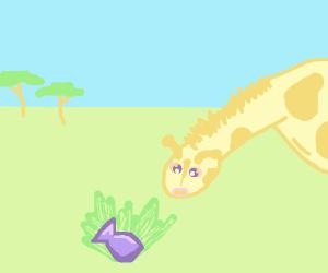 Giraffe finds a water balloon