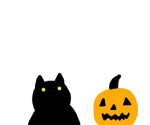 Cat and Jack o' Lantern