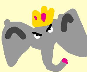 pissed elephant king