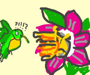 Surprised Hummingbird