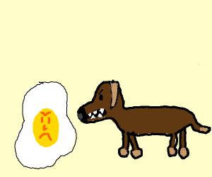 Minature dog angry at egg yolk (same size)