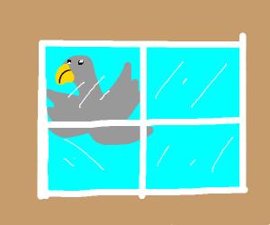 bird flying into window