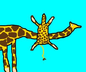 giraff is going to neck catapult baby giraffe