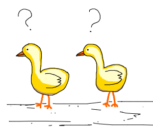 two, confused ducckss