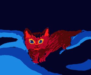 kitten in the night