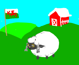 Wooloo in a real Welsh farm