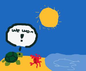 crabs vs turtles war