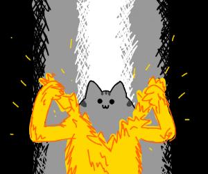 Yellmo is actually Pusheen Cat