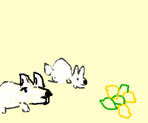 Rabbits looking at pile of limes