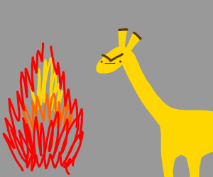 angry giraffe stares at fire
