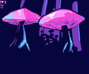 Wild Shrooms