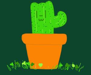 Lucky cactus cat!