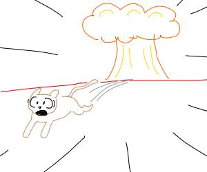 Cat escapes explosion