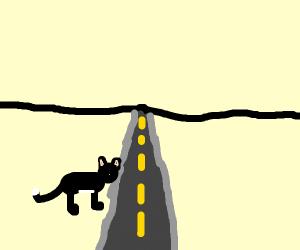cat crosses the street