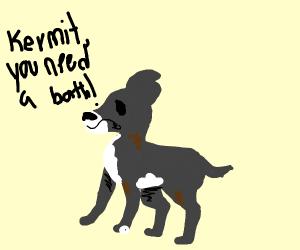 Black greyhound needs a bath