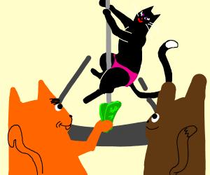 poledancing cat