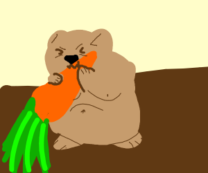 Obese hamster munches on carrot