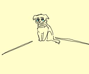 Sad dog in the corner