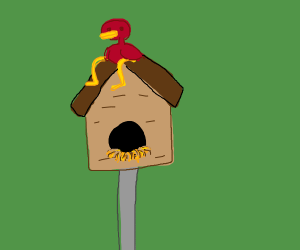 Red Bird sits on birdhouse