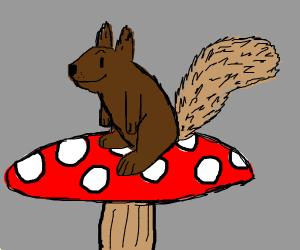 Squirrel sitting on a mushroom