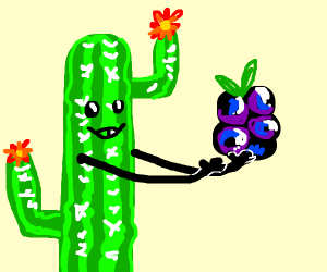 Cactus holds a BlackBerry