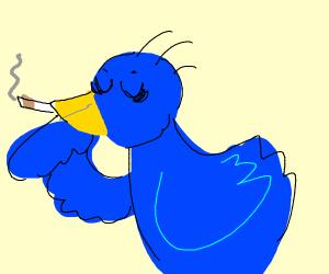 Blue bird smokes a cigarette