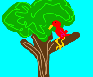 a red bird on top a tree
