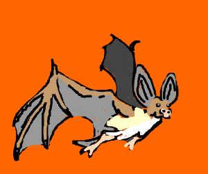 A happy bat!