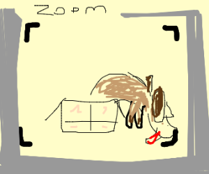 Dog in box zooming licks ground.