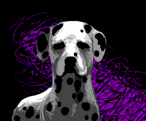 Black and white spotted dog