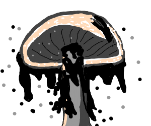 grey mushroom oozing out black goo