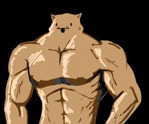 buff cat