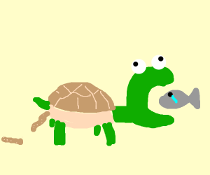 Food goes in turtle, poop comes out turtle