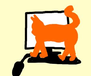 Cat walking across keyboard