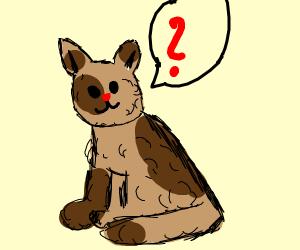 cat???