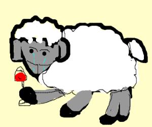 Depressed sheep drinking wine