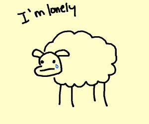 Sad, Lonely Sheep