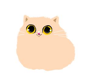 pink fluffy small kitten