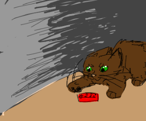 Brown cat plays with Lego