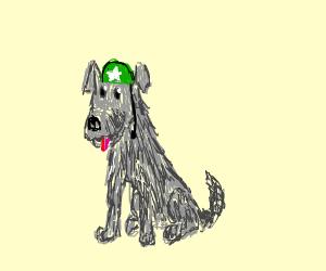 lovable military dog