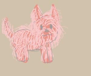 extremely hairy dog
