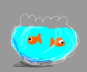 two goldfish in one bowl