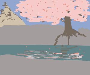 cherry blossoms near a stream