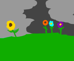 flowers in a field w/ dark cloud